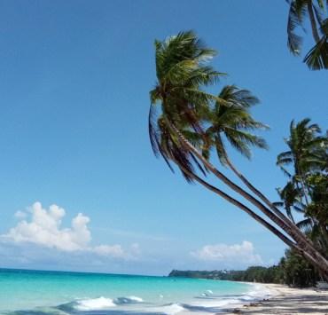 Palm Trees and sea on Boracay's famous White Beach