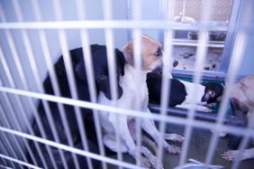 Two of the 35 dogs needing to be adopted after they were rescued from deplorable conditions at a home in Corona.