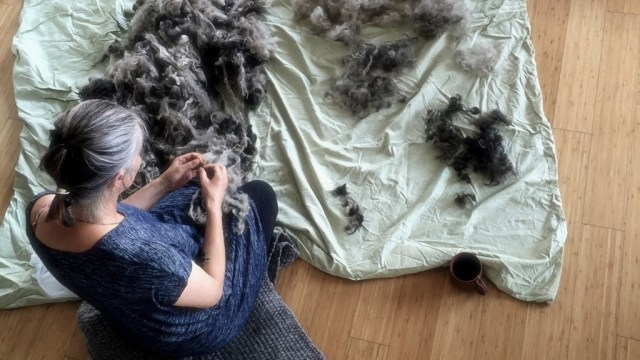 Weaver Heather Dewey (Wovenwares) hand carding the fleece of local sheep on Vancouver Island