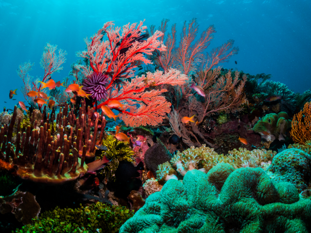 What is the luxurious 'Coral Bloom' Red Sea Project?