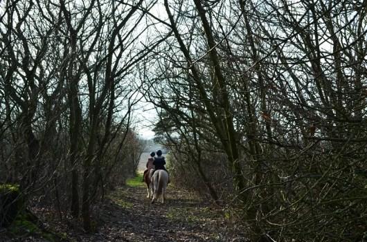 Ridetur i skoven