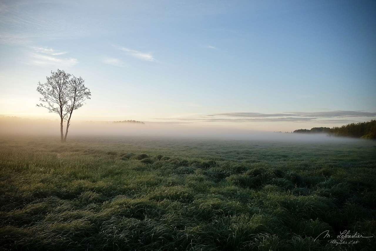 Bia?owie?a Poland morning mist sunrise