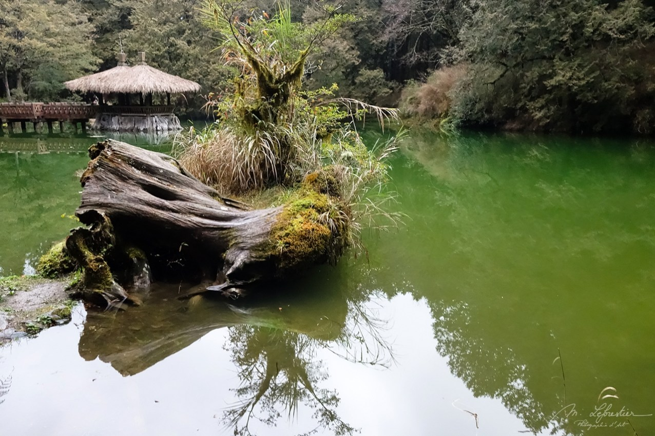 Alishan forest Taiwan