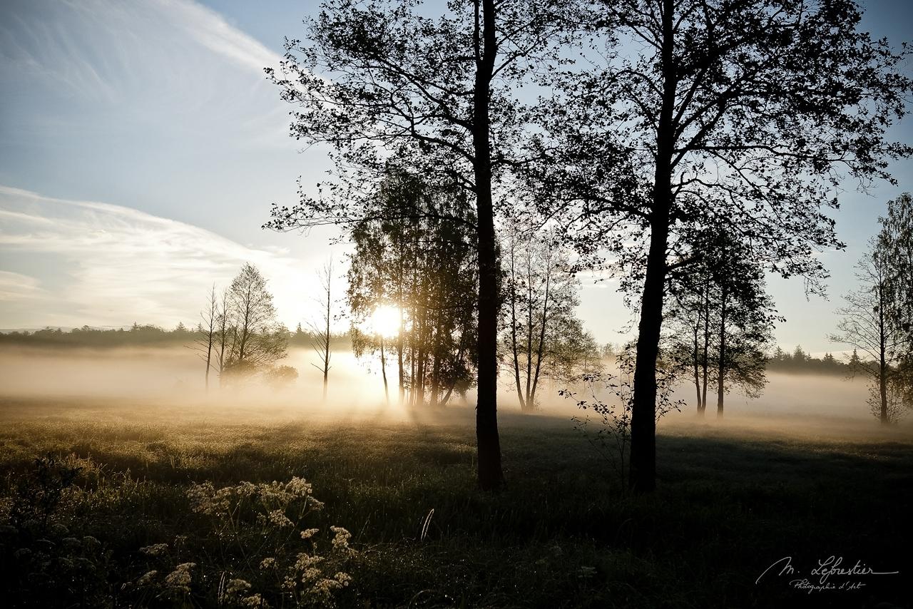 Białowieża Poland sunrise