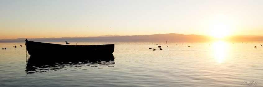 bird on a boat on the lake ohrid during sunset with reflections