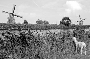 Kinderdijk typical landscape in the Netherlands at Kinderdijk