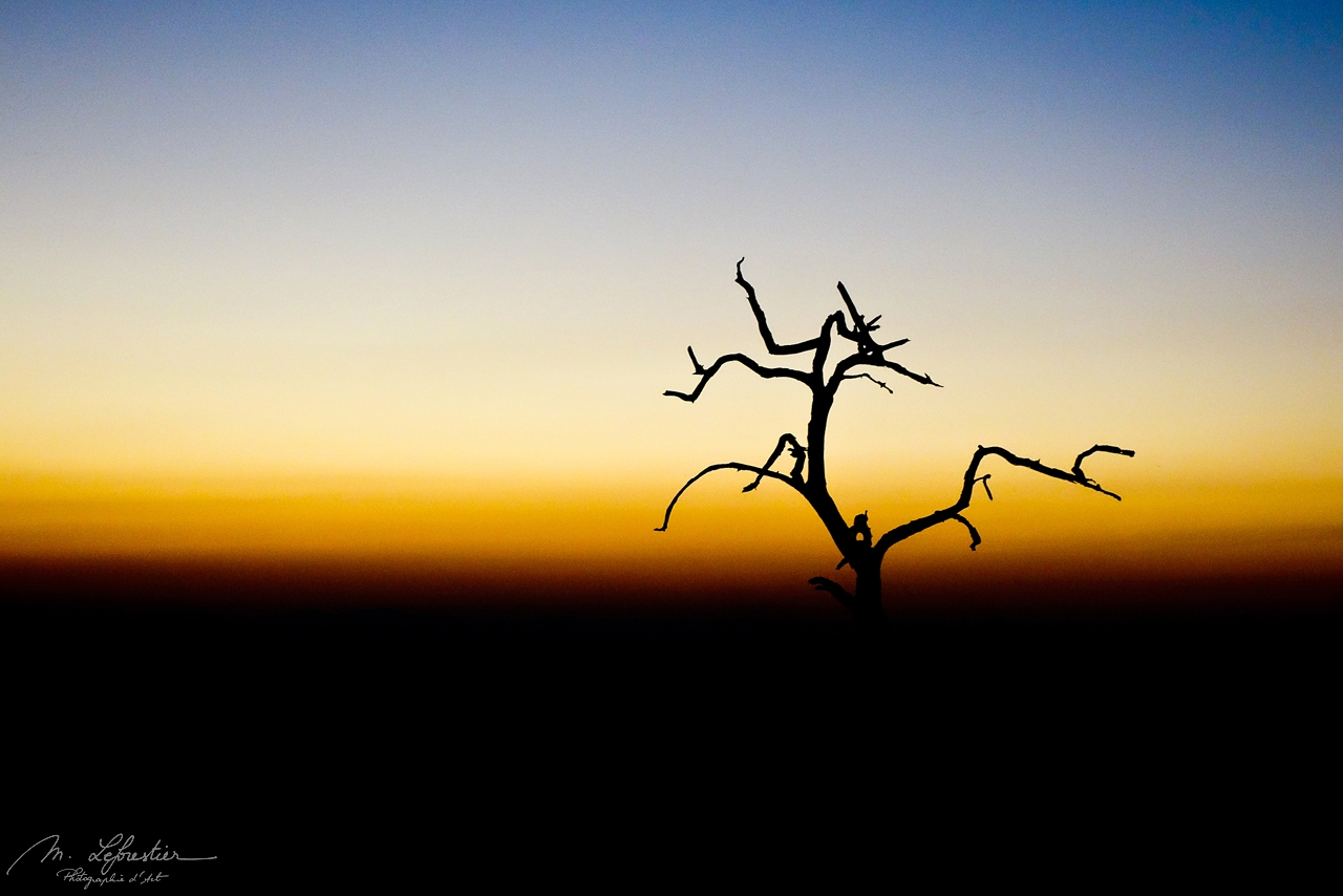 sunset with dead tree in Hlane Royal National Park Swaziland Eswatini