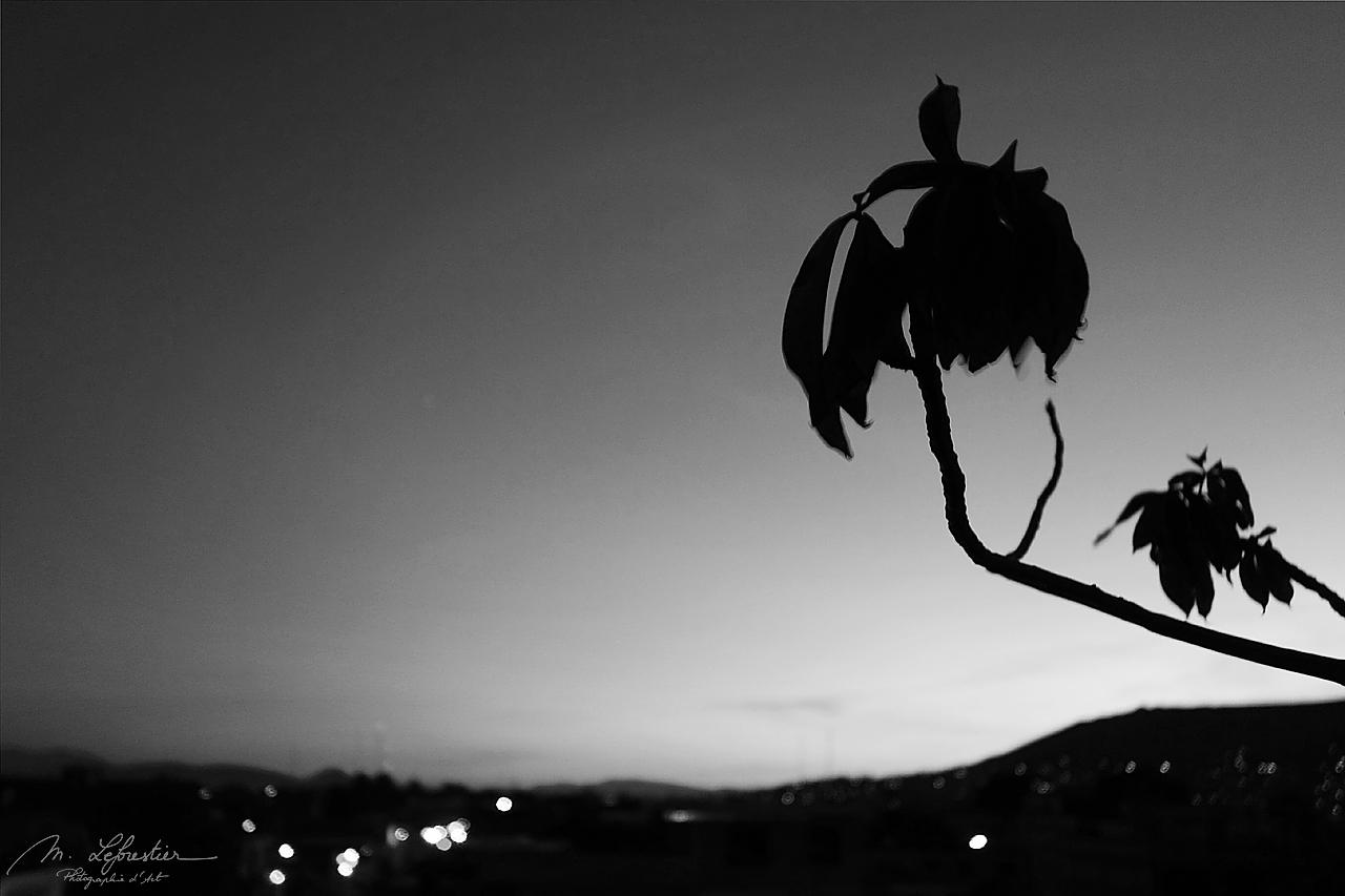 view on Oxaca by night