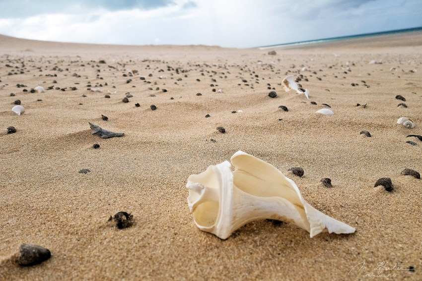 shells on the sand on the Bazaruto island in Mozambique