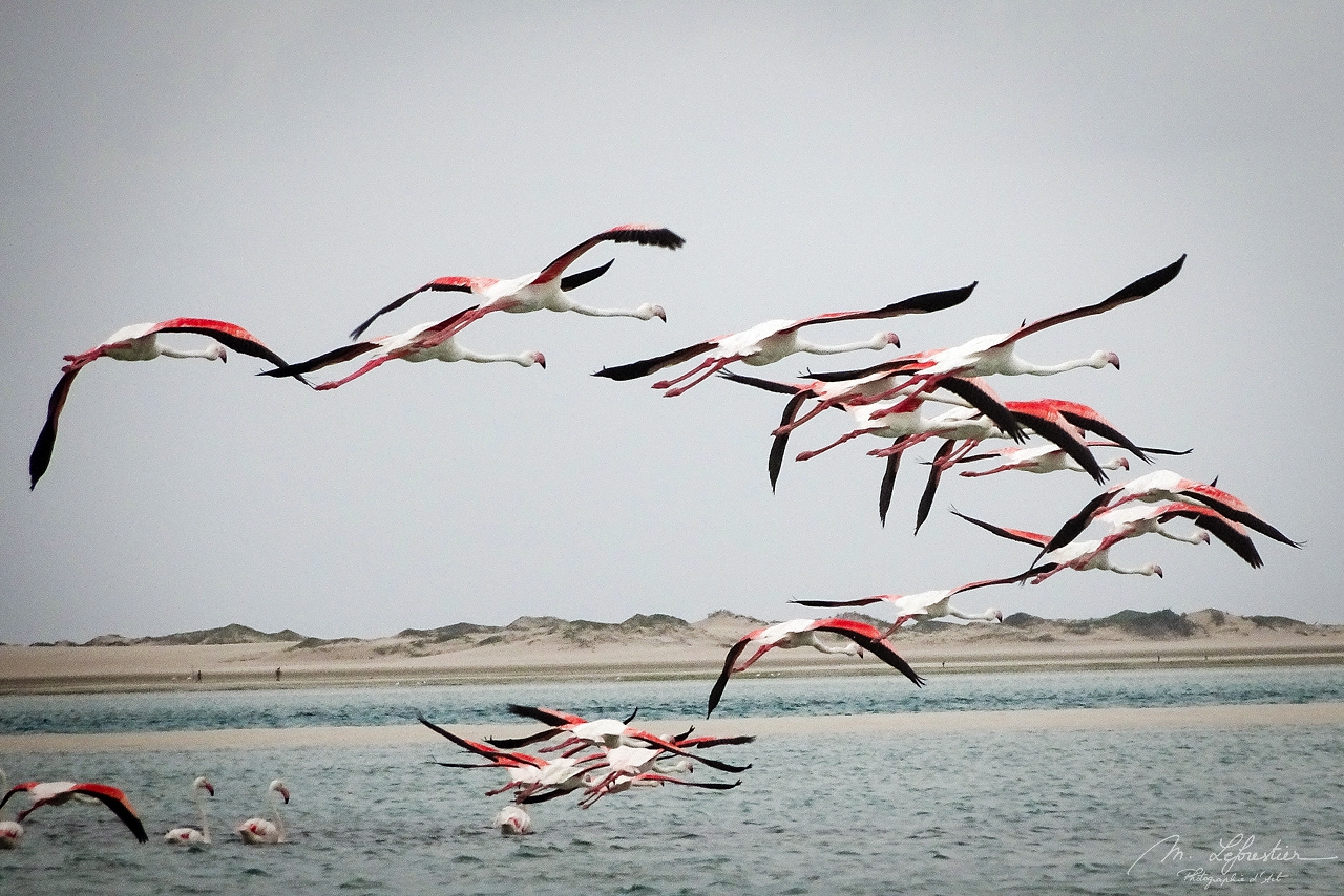 some flamingos are flying over the sea during a storm by Bazaruto island in Mozambique