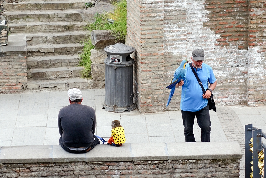 a bin watching a monkey and a parrot being used for money in Tbilisi Georgia