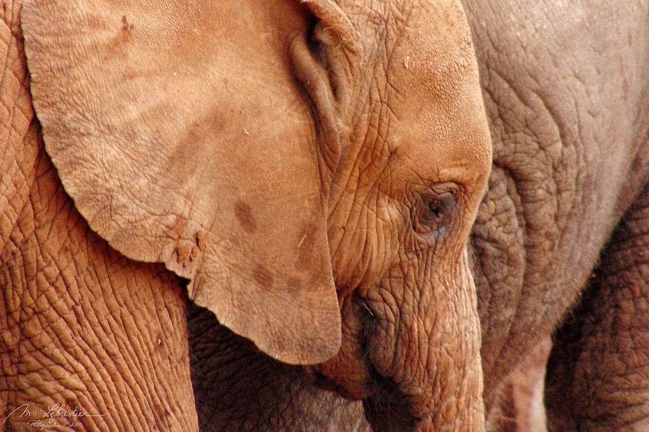 a baby elephant close up at david sheldrick wildlife trust center in Nairobi Kenya