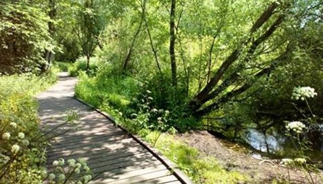 Laverstock's Hidden Wildlife Gem