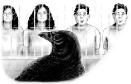 crow-intelligence-3
