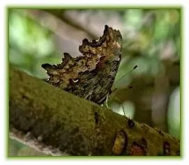 brown-butterfly-branch-shade