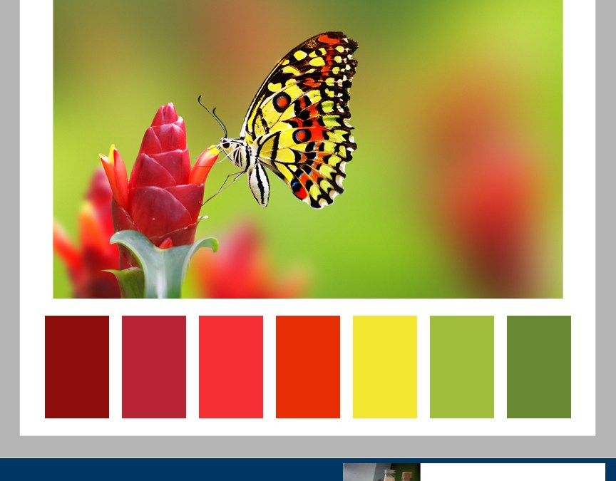 Color Formula 6: ISO Cooperative Butterflies