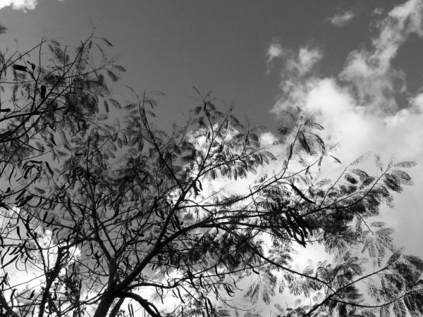 b-w tree 3