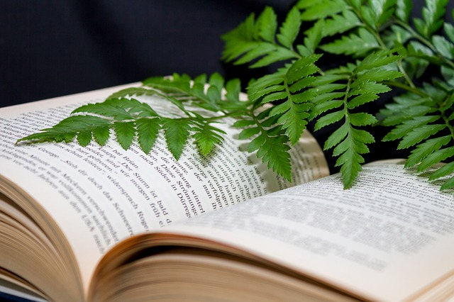 An open book with a fern frond lying across it