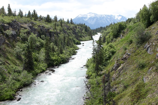 View of the Tutshi River from the Yukon Suspension Bridge