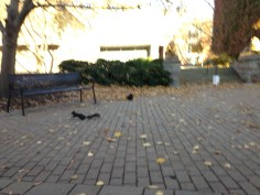 Two black squirrels!