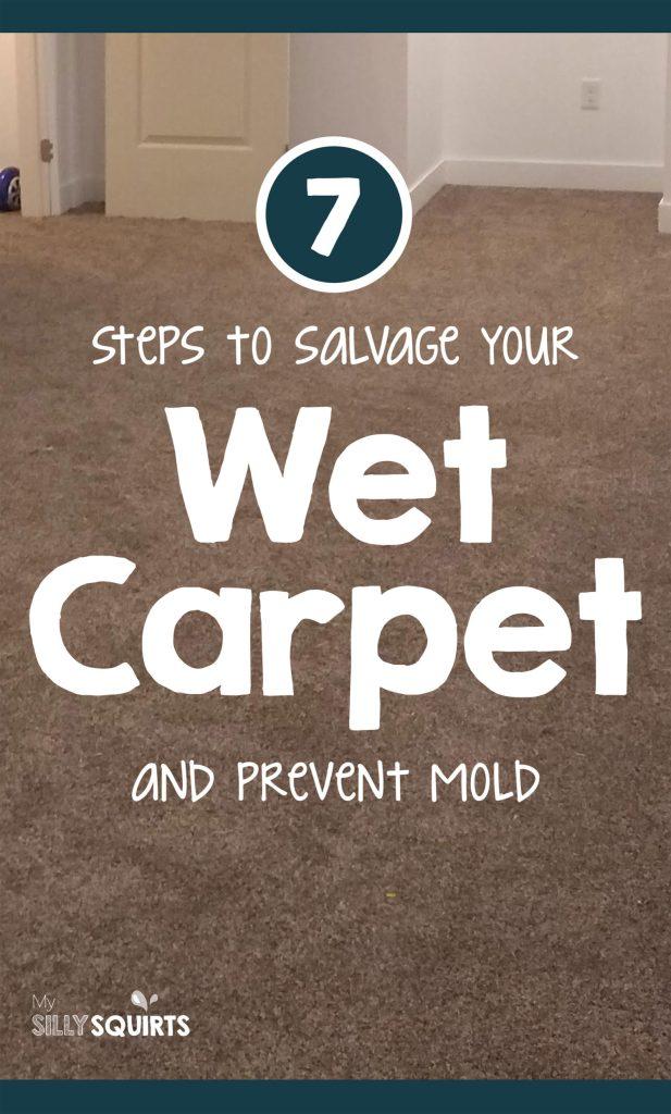 Wet Carpet Tips To Prevent Mold And, Wet Carpet In Corner Of Basement