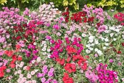 Flowers at Saheliyo ki badi Udaipur