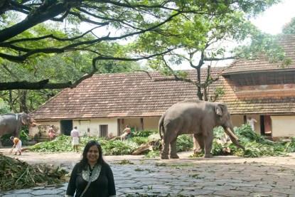 Guruvayoor elephant 1