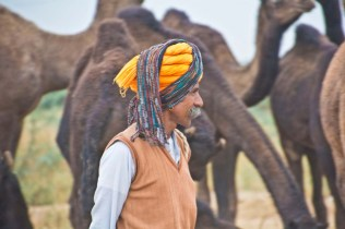 Pushkar camel fair in morning