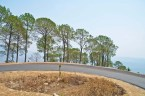 road and tree