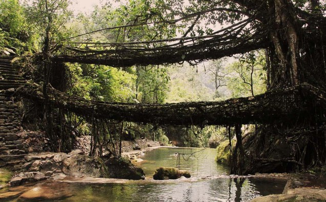 Living root bridge Most Beautiful Places in India