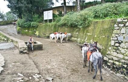 Horses in Kufri