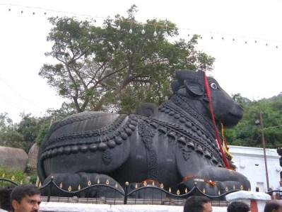 Monolithic statue of Nandi bull at chamundi Hill Mysore