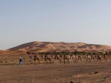 Erfoud - Mercader camellos