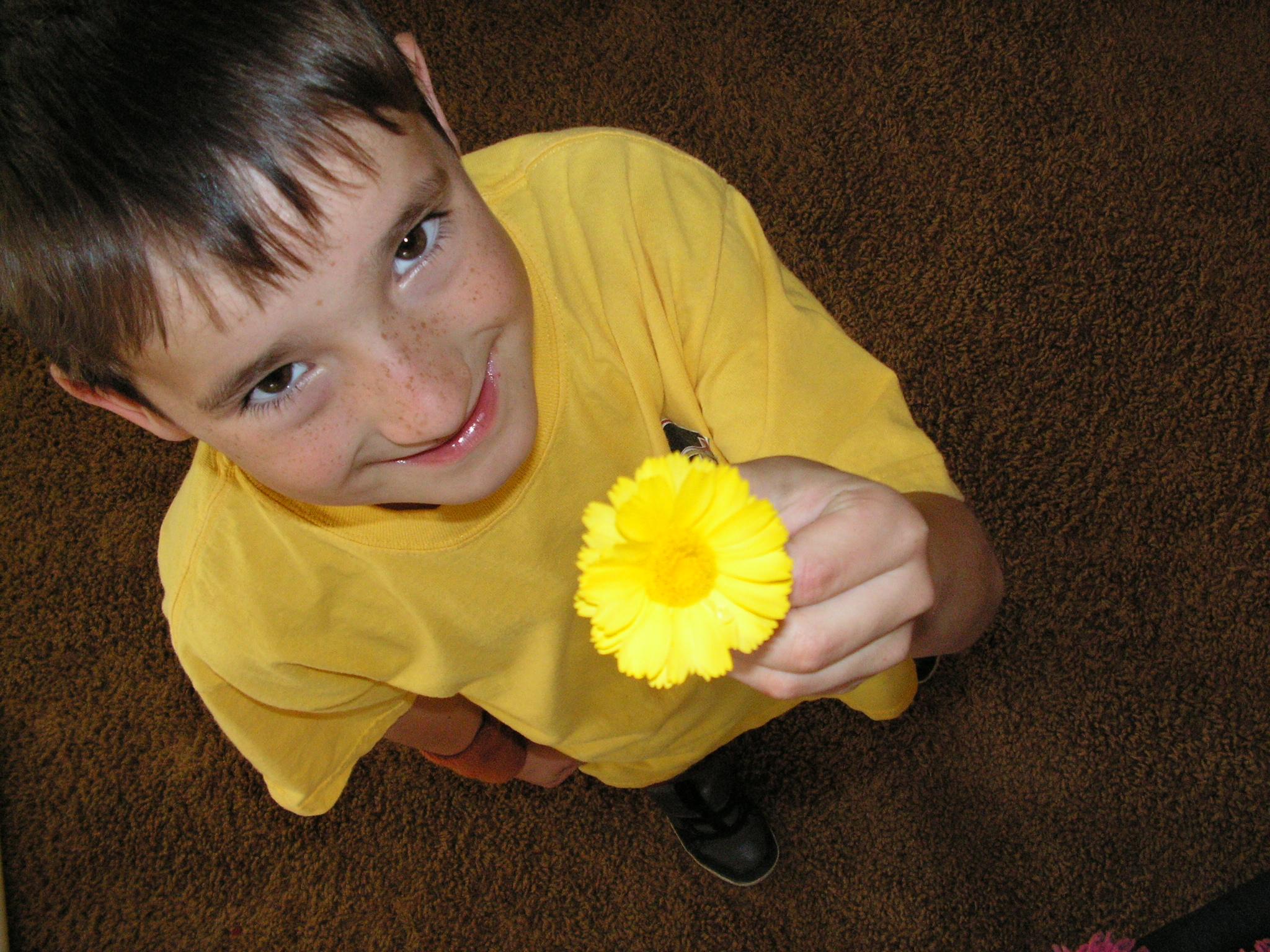 keeve's yellowflower