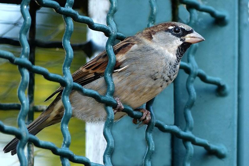 bird-984559_1280