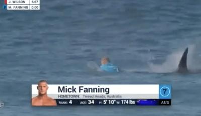Акула напала на серфера во время соревнований