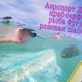 Серфинг на Бали: Аэропорт лэфт, Краб - серфер, рыба Фугу и розовая шапочка