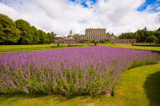 cliveden-grounds-parterre-with-lavender