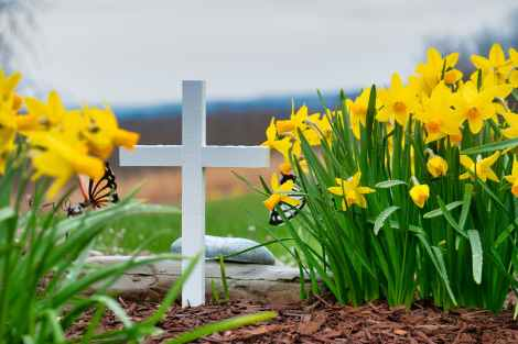 christian cross surrounded by daffodils, fear of dying, death, graveyard, butterflies,