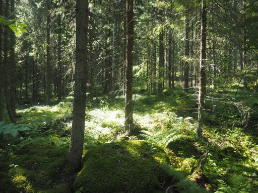 forest therapy, forest bathing,