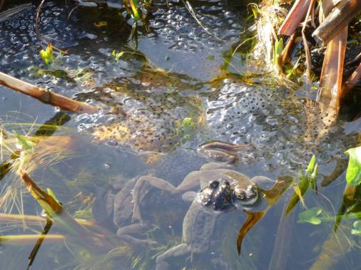 Charlotte Wiles Frogs and Spawn 1