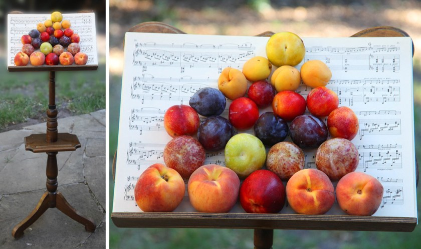History of Pluot