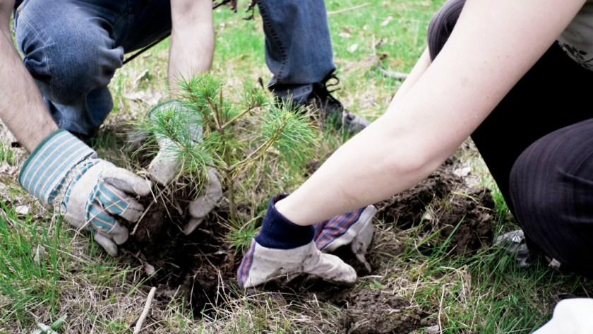 How to Save Trees From Dying
