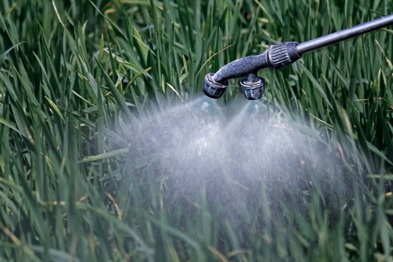 Apply a Curative Insecticide