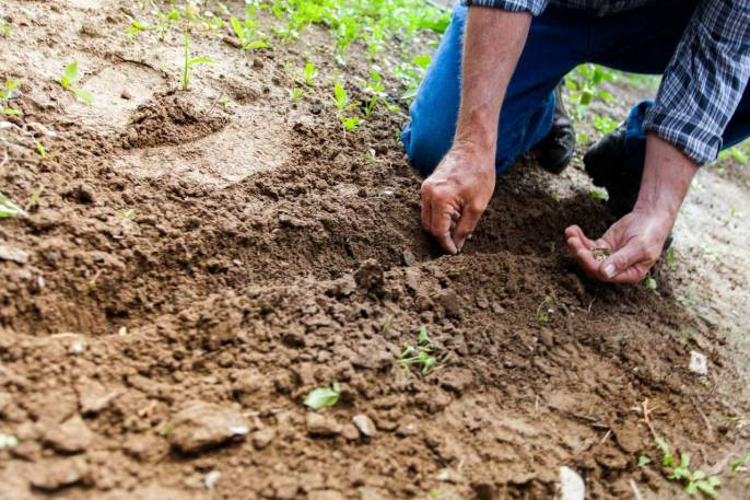 Tips of How to Plant Grass Seed on Hard Dirt