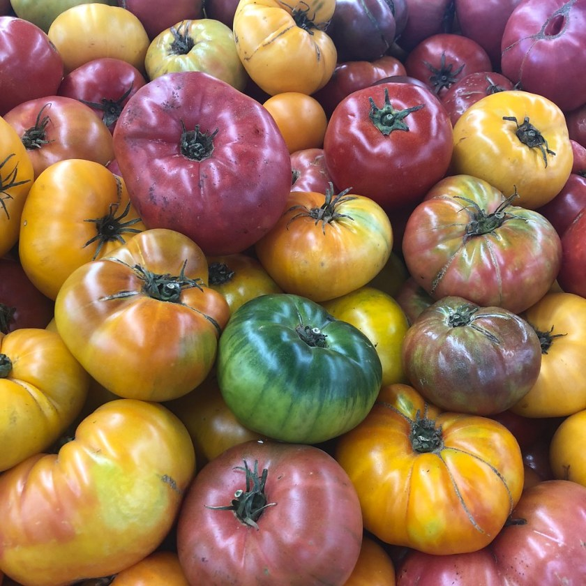 Are Better Boy Tomatoes Toxic?