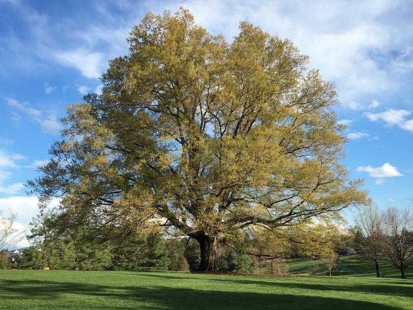 Oak Tree Common Issues