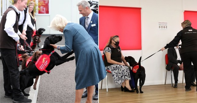 The Duchess of Cornwall has come up close and personal with dogs being trained to sniff out coronavirus.