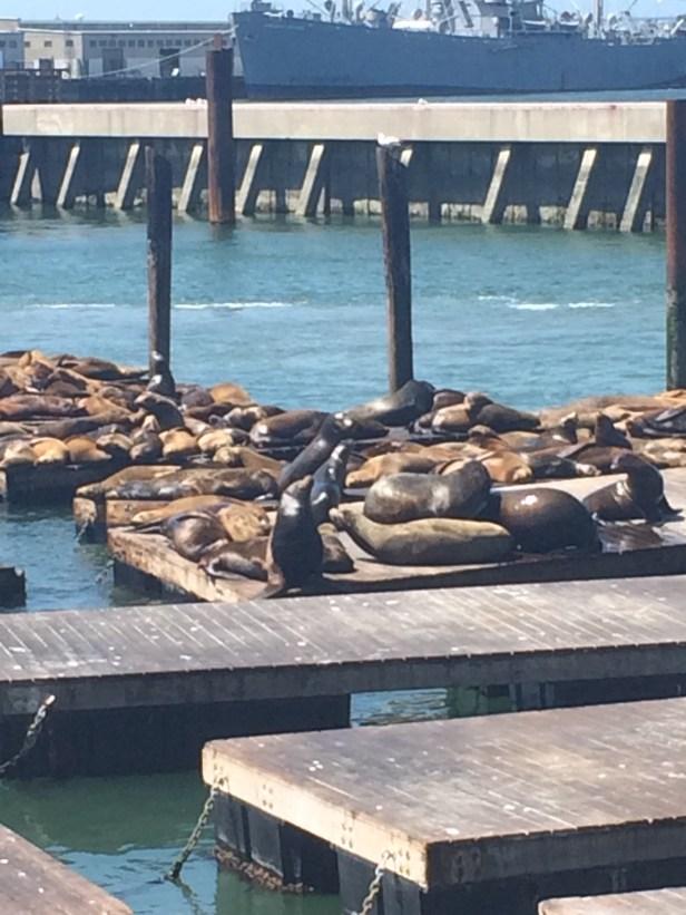More obligatory sea lion photos.