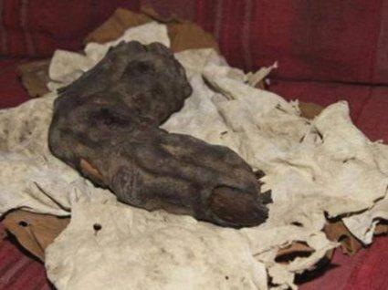 O dedo gigante egípcio